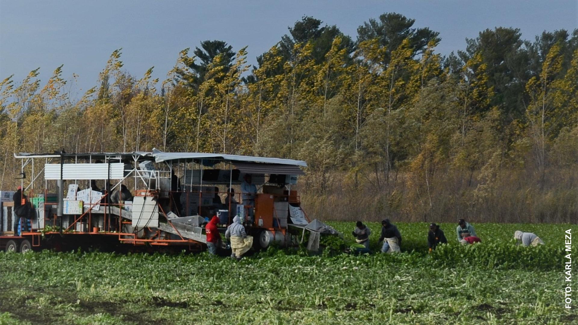 Nuevo brote de covid-19 entre trabajadores agrícolas mexicanos en Lanaudière