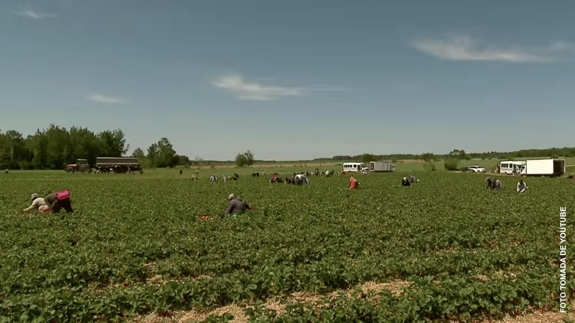 Trabajadores agrícolas denuncian explotación en granjas de Quebec