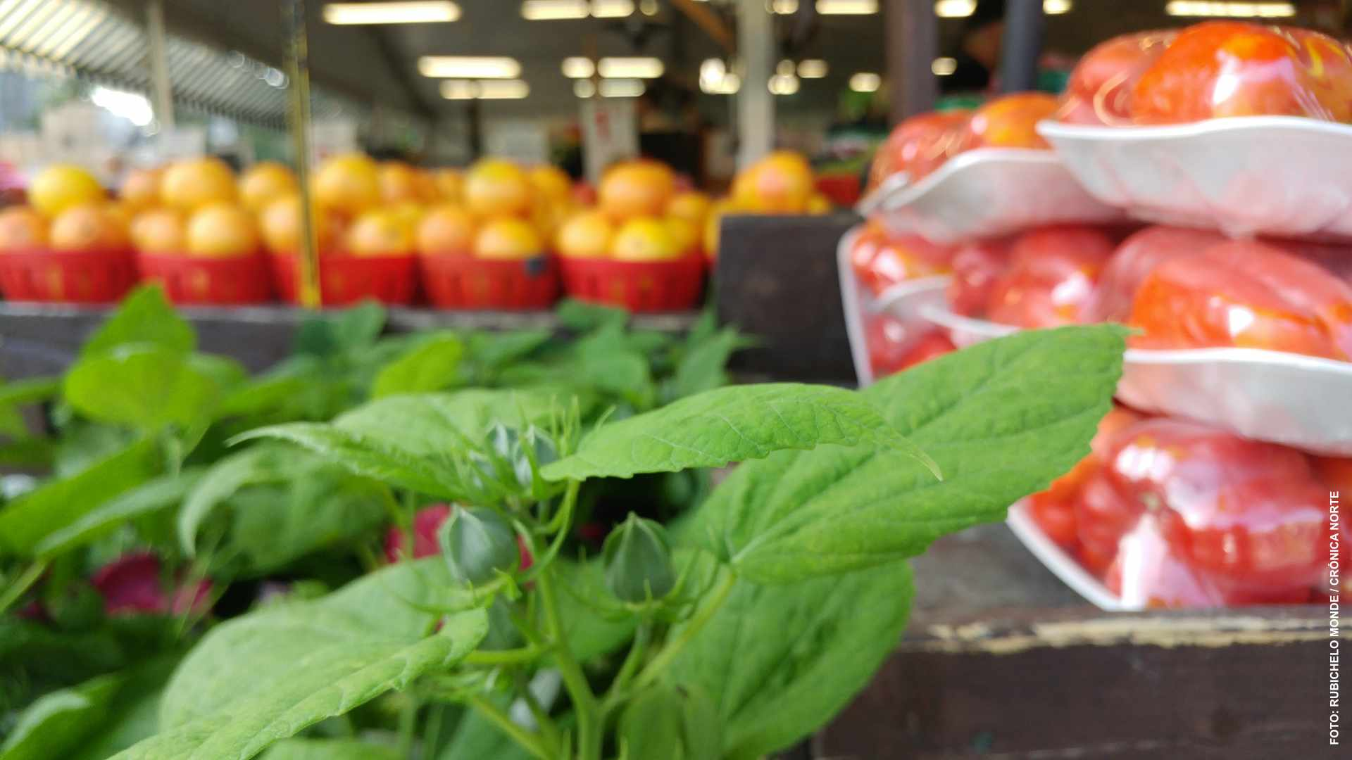 Suspenden consultas sobre aumento de pesticidas